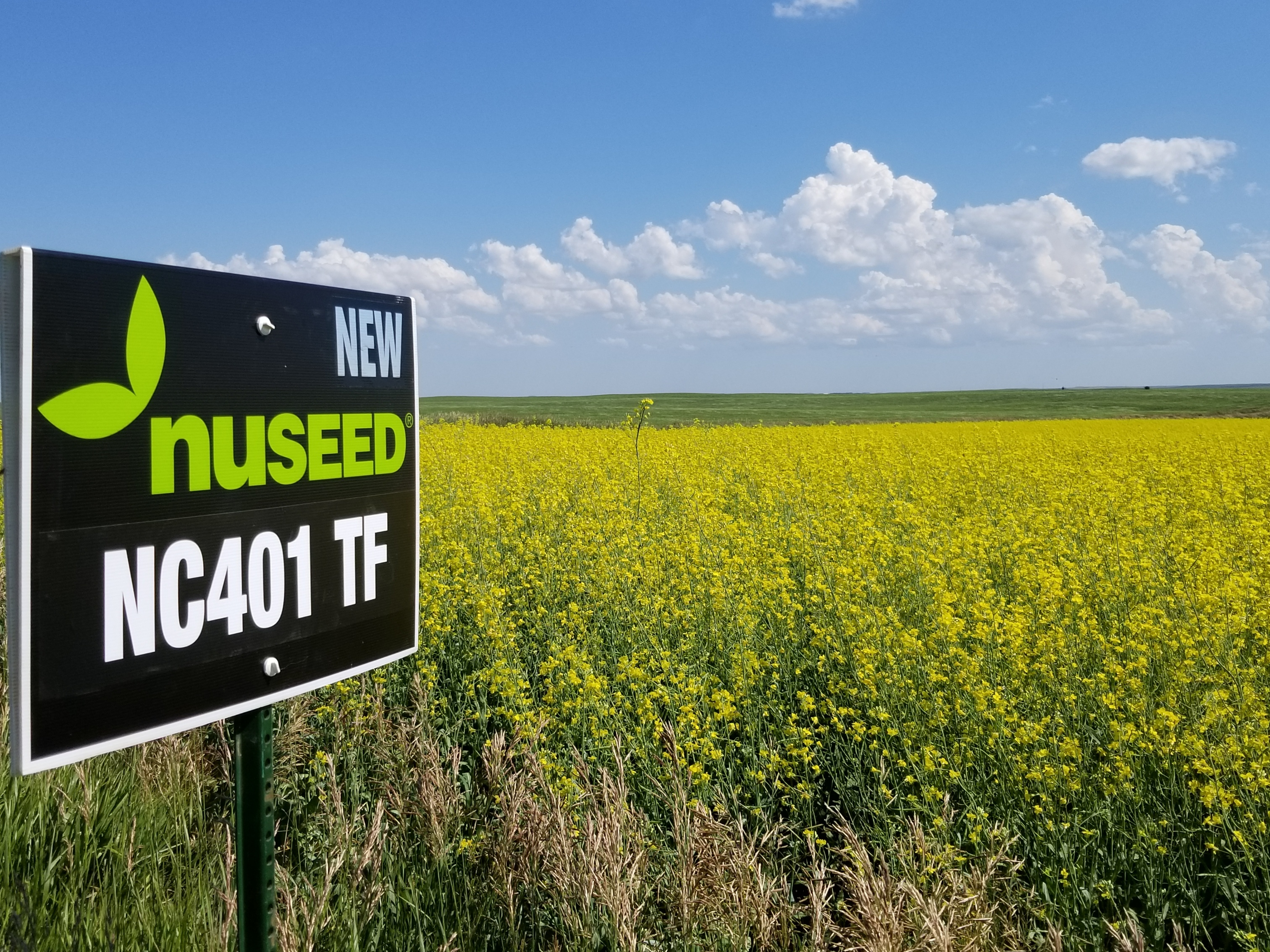 Canola sign.jpg