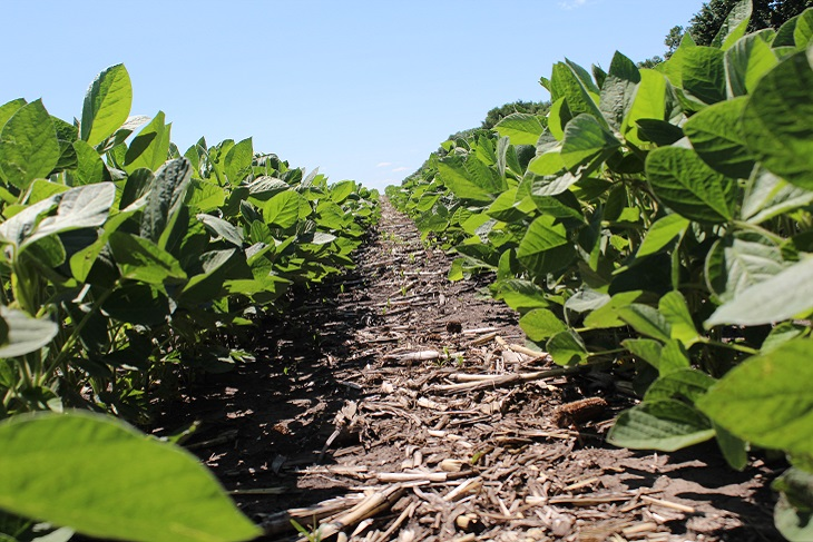 Soybean2_blog.JPG